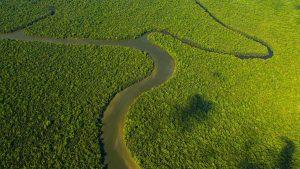La forêt de Bornéo vue du ciel